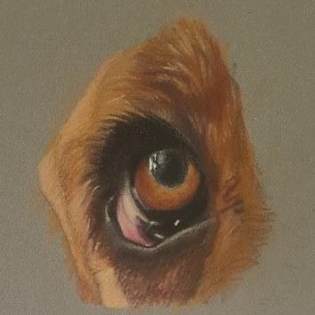 Basset eye focus