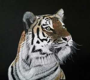 scratchboard with water colour pencil